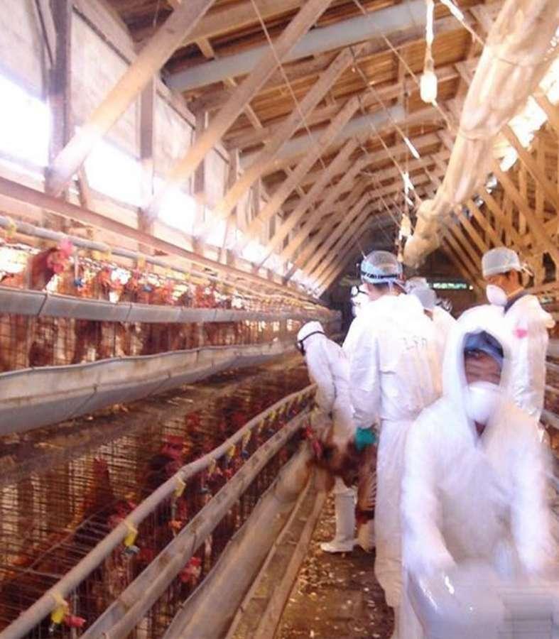 Expertos chinos que identificaron COVID-19 alertan por gripe H5N8