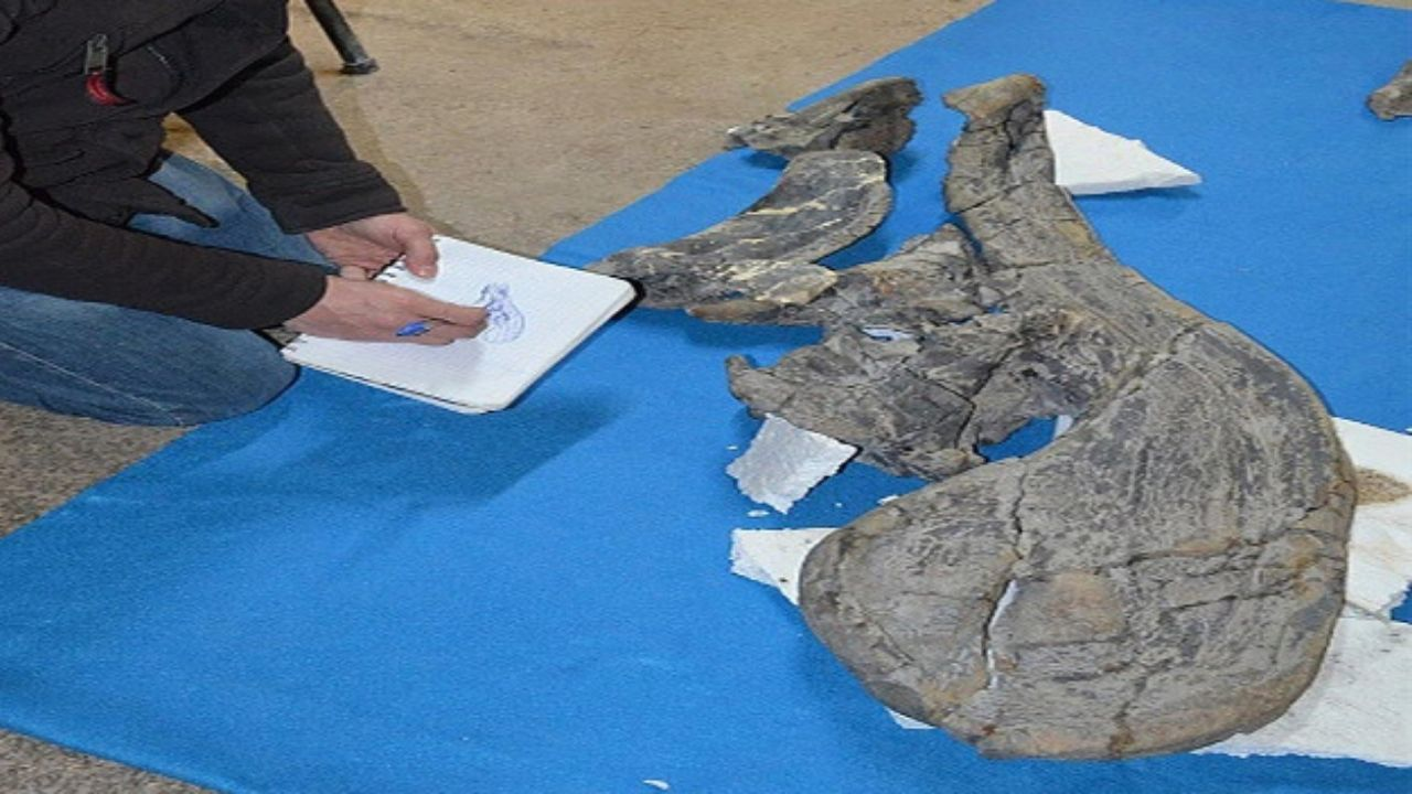 Descubren en México nueva especie de dinosaurio