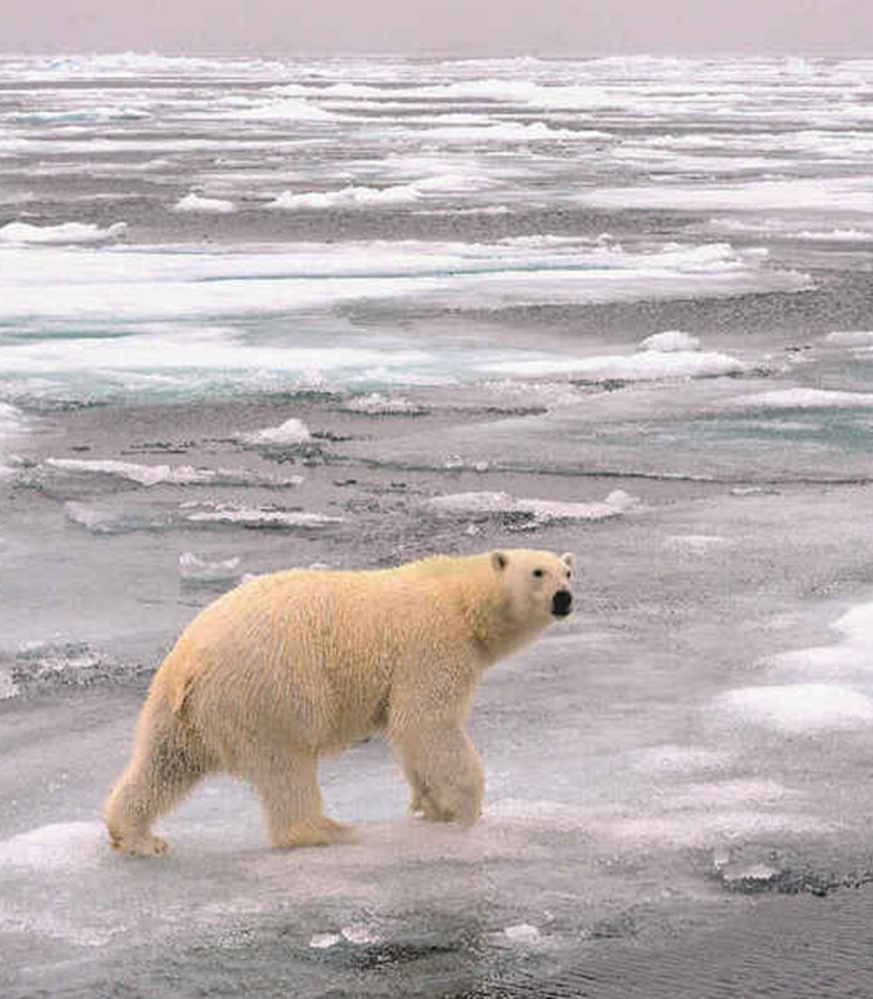 Biden suspende las perforaciones de petróleo y gas en el Refugio Nacional de Vida Silvestre del Ártico